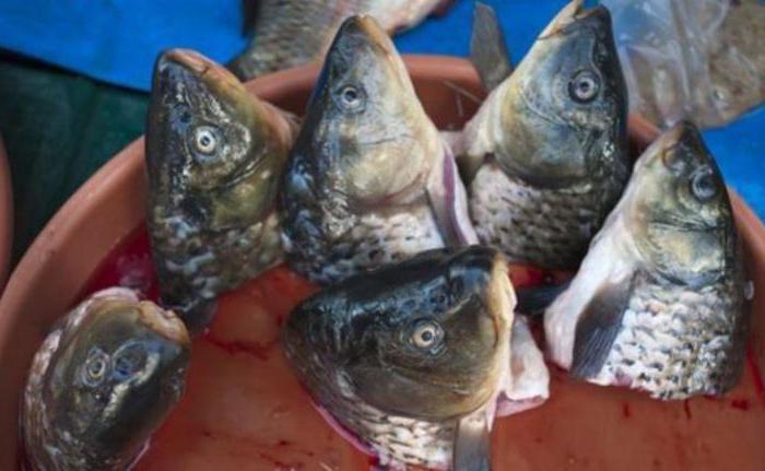 τα ψάρια μου που χρονολογούνται