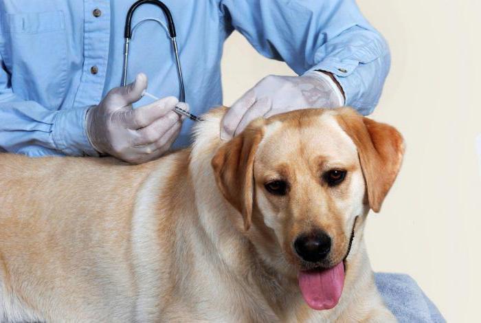 Галзуу нохойны эсрэг вакцин