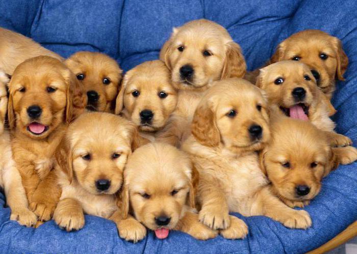 Нохойны нэрийг нэрлэдэг Rabies вакцин