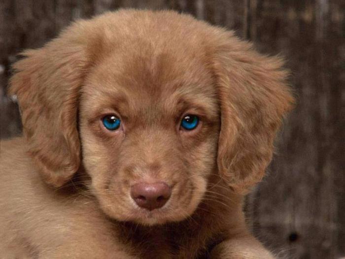 16++ Anak anjing yang baru lahir terbaru